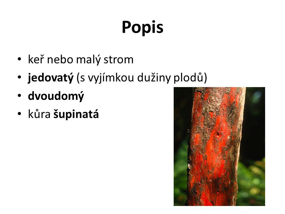 Popis keř nebo malý strom jedovatý (s vyjímkou dužiny plodů) dvoudomý
