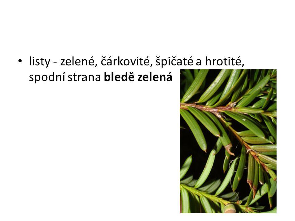 listy - zelené, čárkovité, špičaté a hrotité, spodní strana bledě zelená