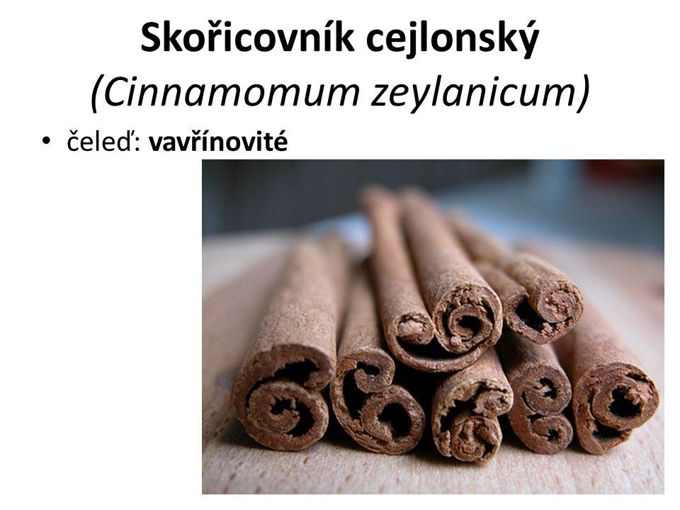 Skořicovník cejlonský (Cinnamomum zeylanicum)