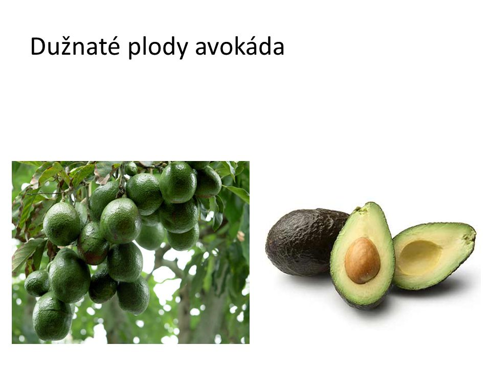 Dužnaté plody avokáda