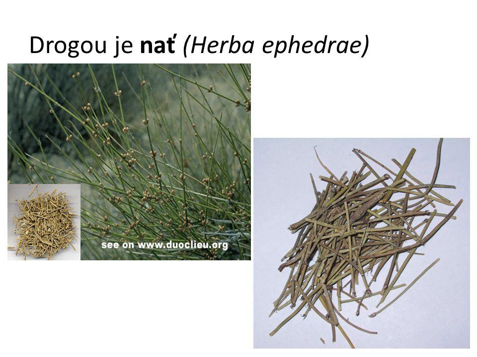 Drogou je nať (Herba ephedrae)