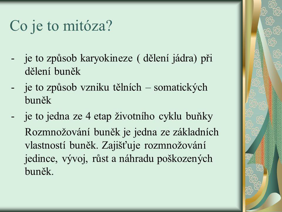 Co je to mitóza je to způsob karyokineze ( dělení jádra) při dělení buněk. je to způsob vzniku tělních – somatických buněk.