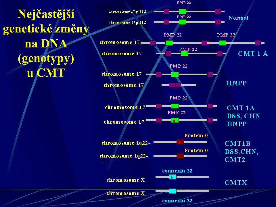 Nejčastější genetické změny na DNA (genotypy) u CMT