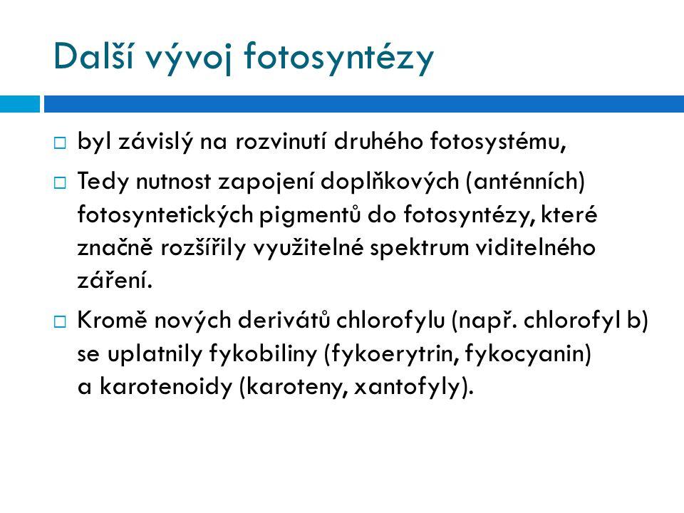 Další vývoj fotosyntézy