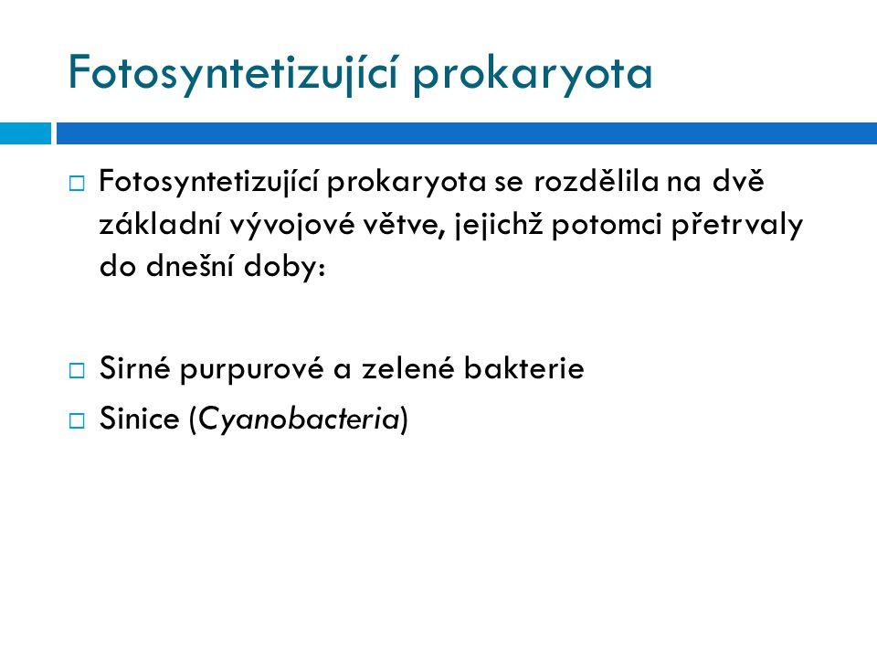 Fotosyntetizující prokaryota