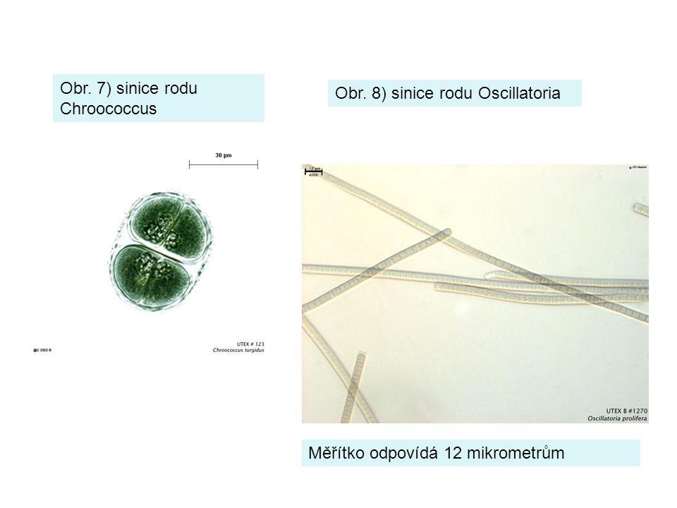 Obr. 7) sinice rodu Chroococcus