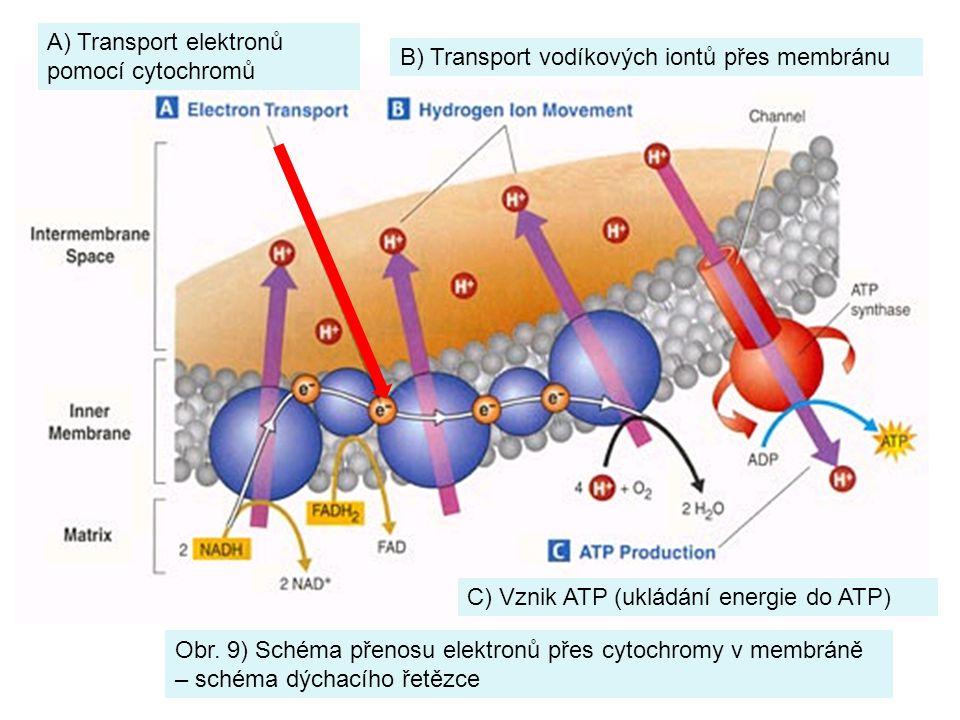 A) Transport elektronů pomocí cytochromů