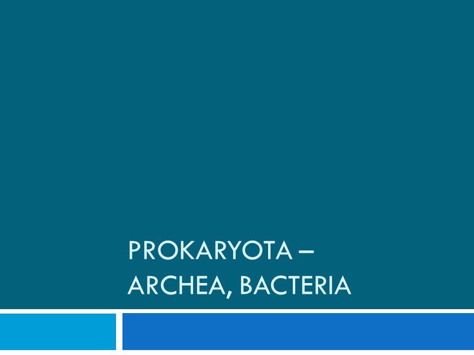 Prokaryota – archea, bacteria