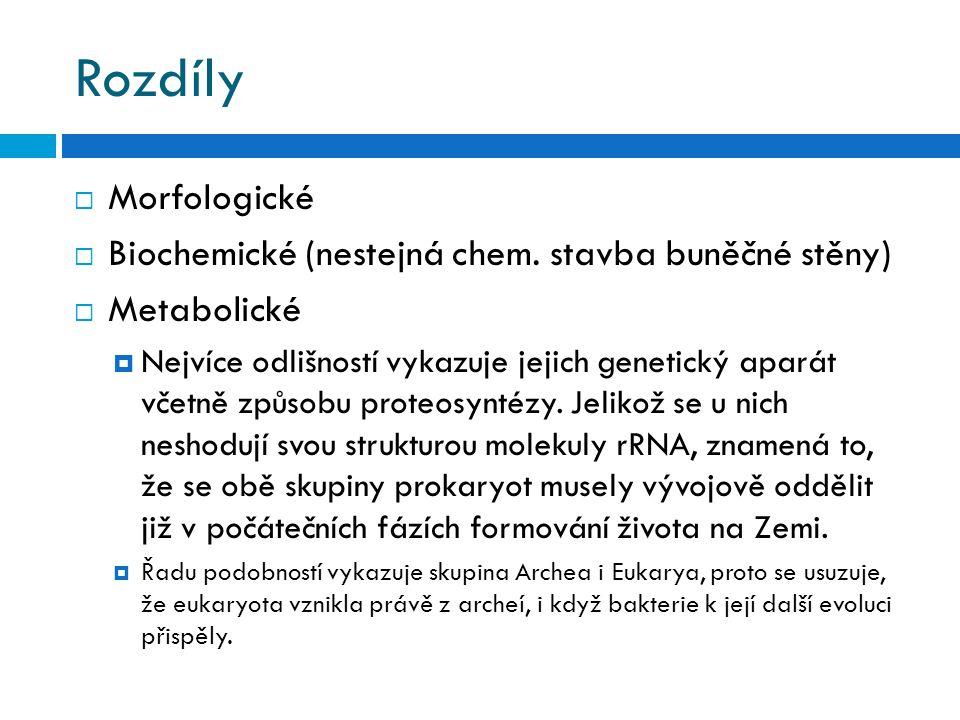 Rozdíly Morfologické Biochemické (nestejná chem. stavba buněčné stěny)