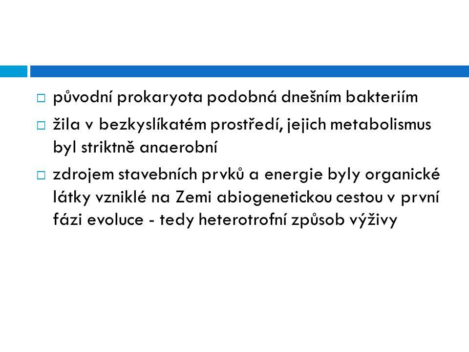 původní prokaryota podobná dnešním bakteriím