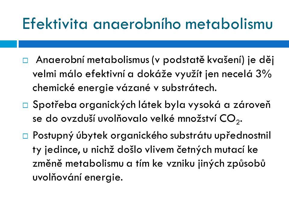 Efektivita anaerobního metabolismu