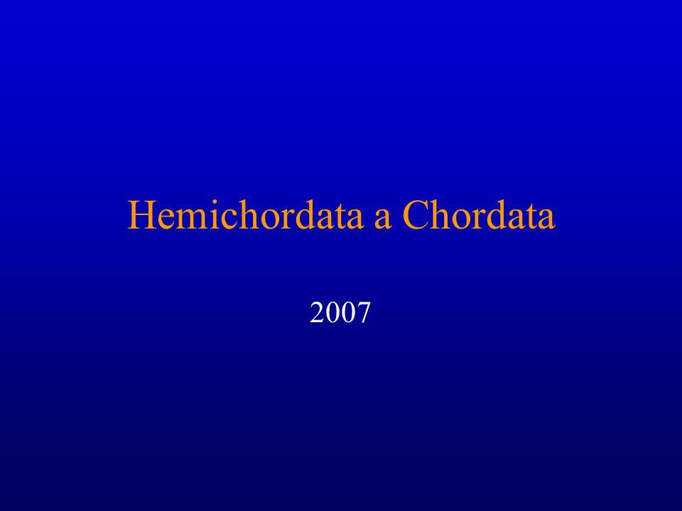 Hemichordata a Chordata