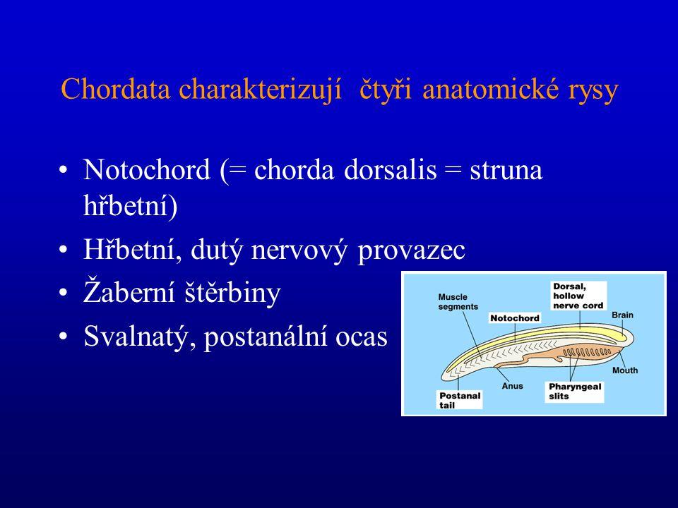 Chordata charakterizují čtyři anatomické rysy