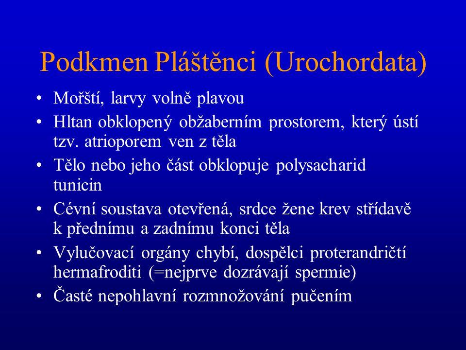 Podkmen Pláštěnci (Urochordata)