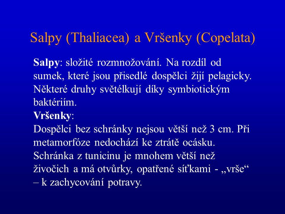 Salpy (Thaliacea) a Vršenky (Copelata)