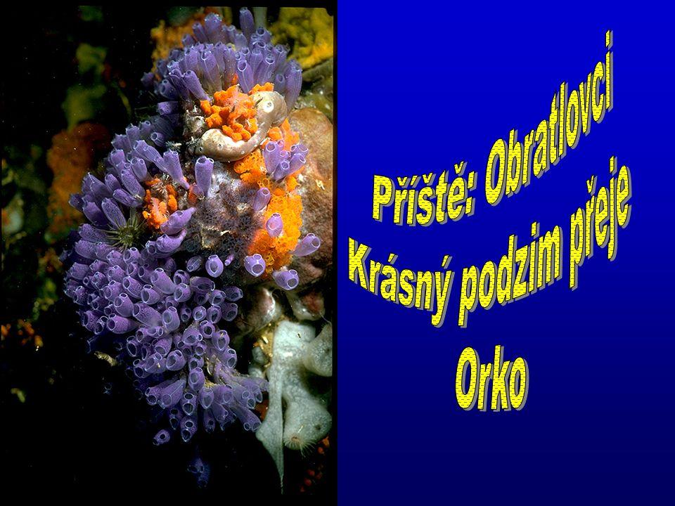 Příště: Obratlovci Krásný podzim přeje Orko