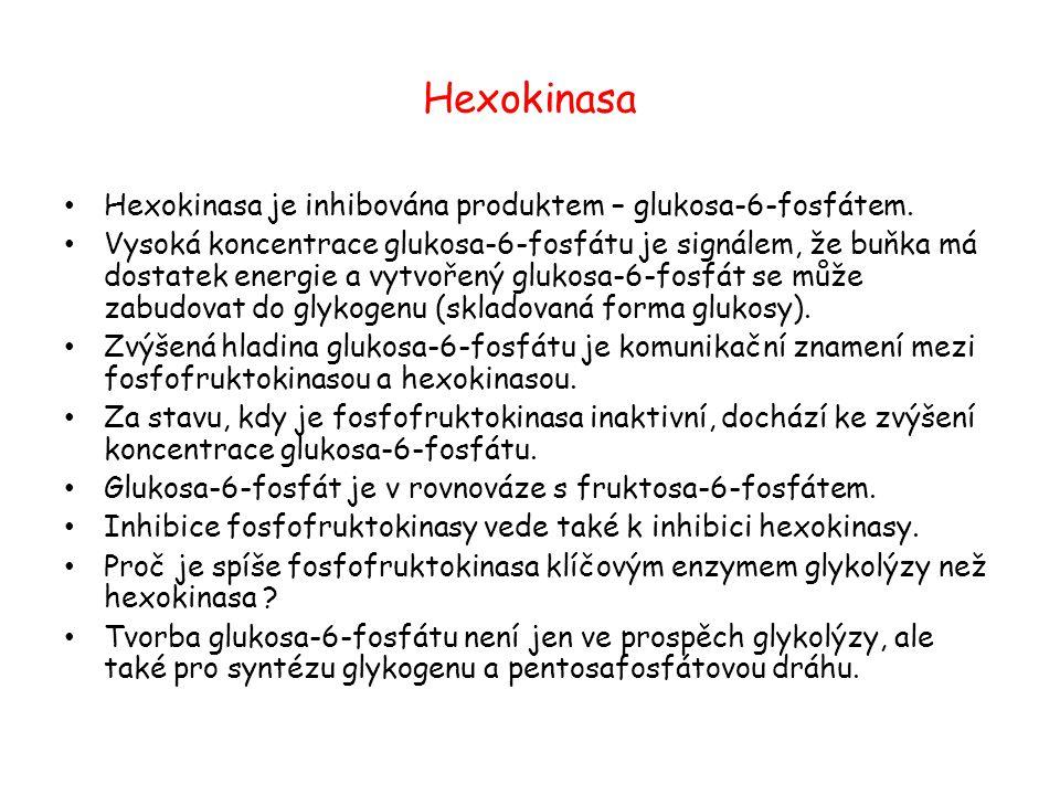 Hexokinasa Hexokinasa je inhibována produktem – glukosa-6-fosfátem.