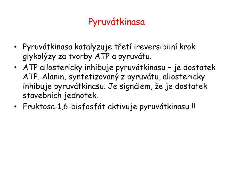 Pyruvátkinasa Pyruvátkinasa katalyzuje třetí ireversibilní krok glykolýzy za tvorby ATP a pyruvátu.