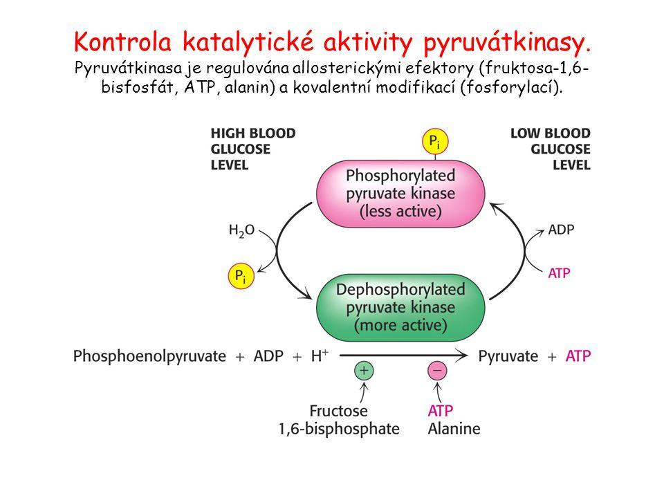 Kontrola katalytické aktivity pyruvátkinasy