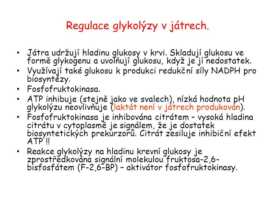 Regulace glykolýzy v játrech.