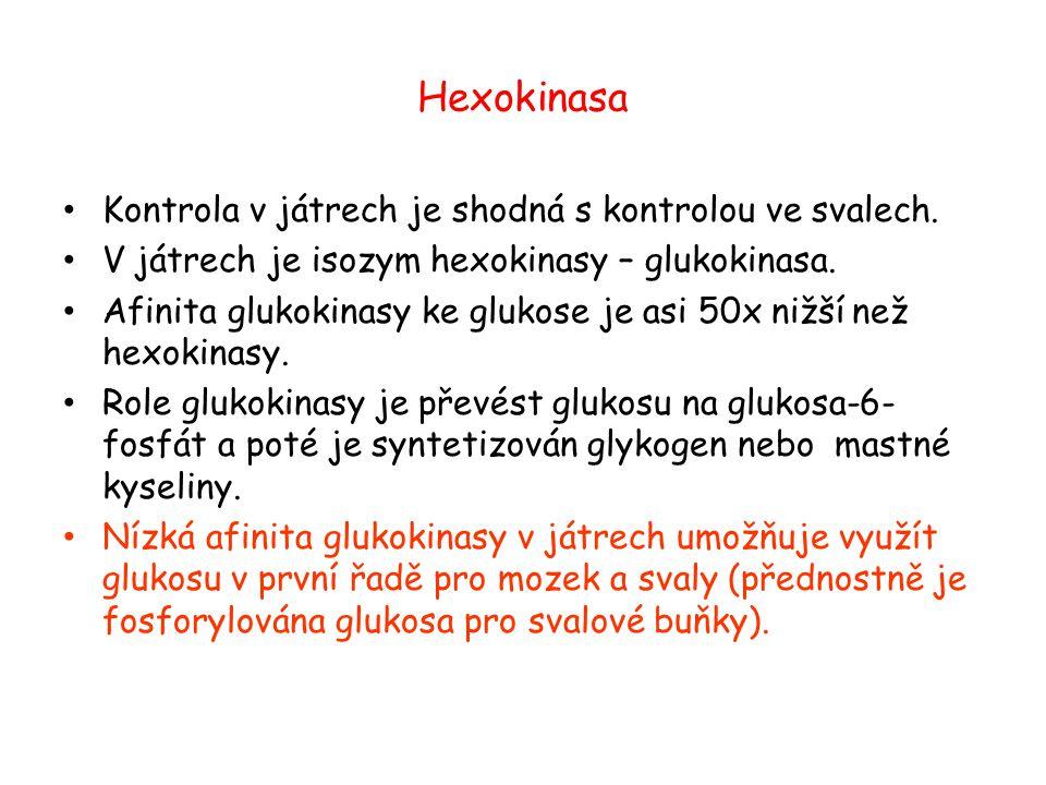 Hexokinasa Kontrola v játrech je shodná s kontrolou ve svalech.