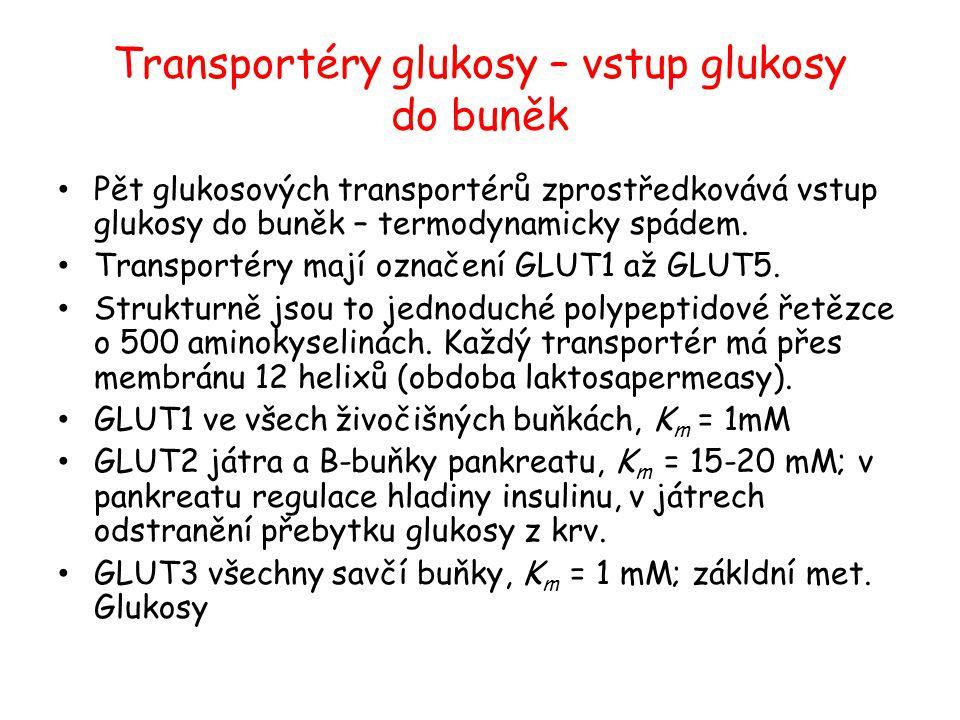 Transportéry glukosy – vstup glukosy do buněk