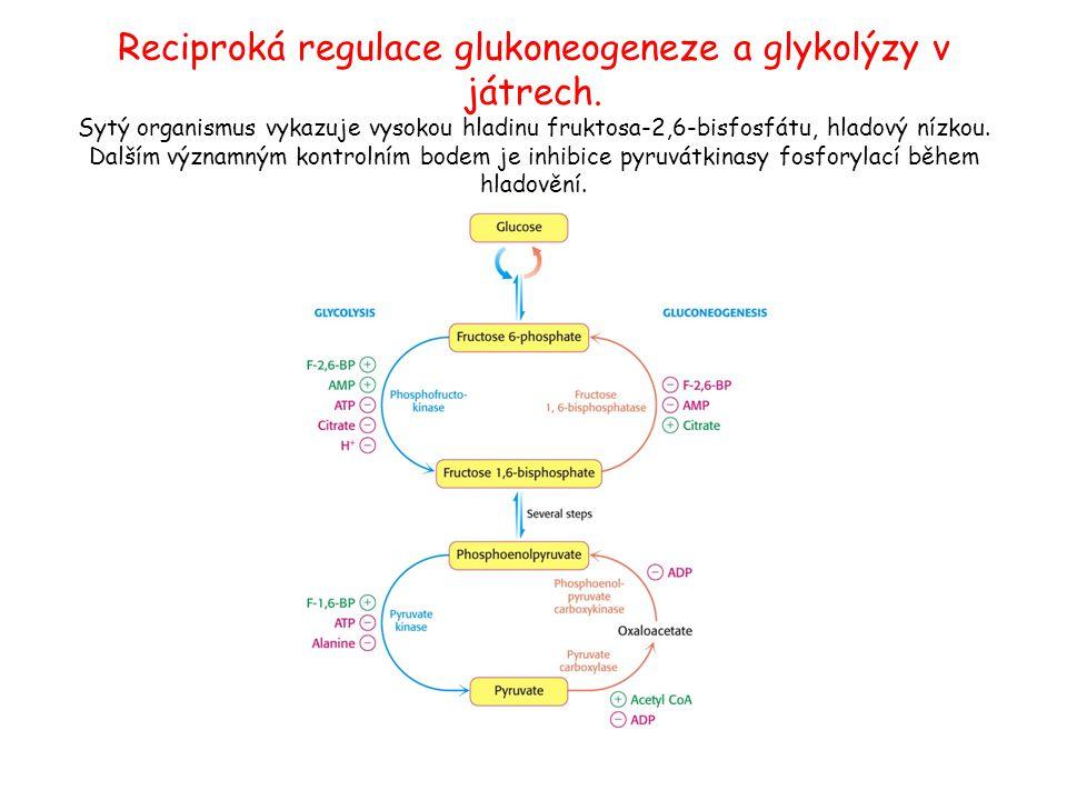 Reciproká regulace glukoneogeneze a glykolýzy v játrech