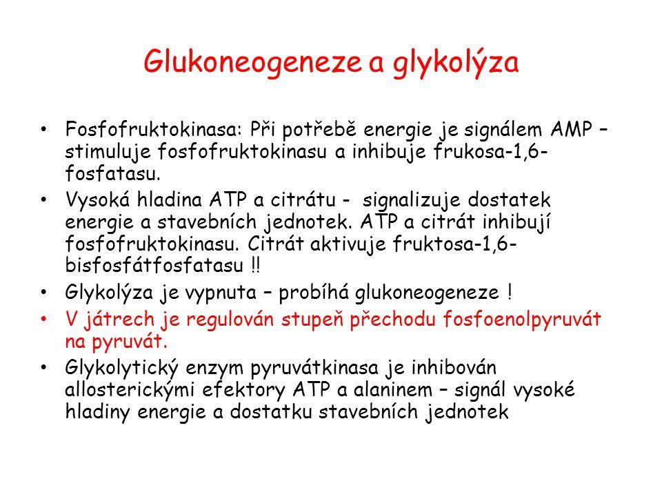 Glukoneogeneze a glykolýza