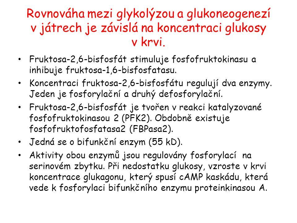 Rovnováha mezi glykolýzou a glukoneogenezí v játrech je závislá na koncentraci glukosy v krvi.