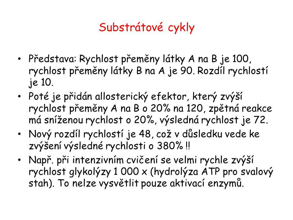 Substrátové cykly Představa: Rychlost přeměny látky A na B je 100, rychlost přeměny látky B na A je 90. Rozdíl rychlostí je 10.