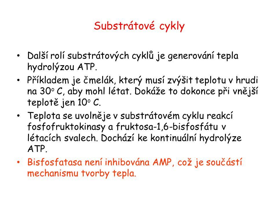 Substrátové cykly Další rolí substrátových cyklů je generování tepla hydrolýzou ATP.