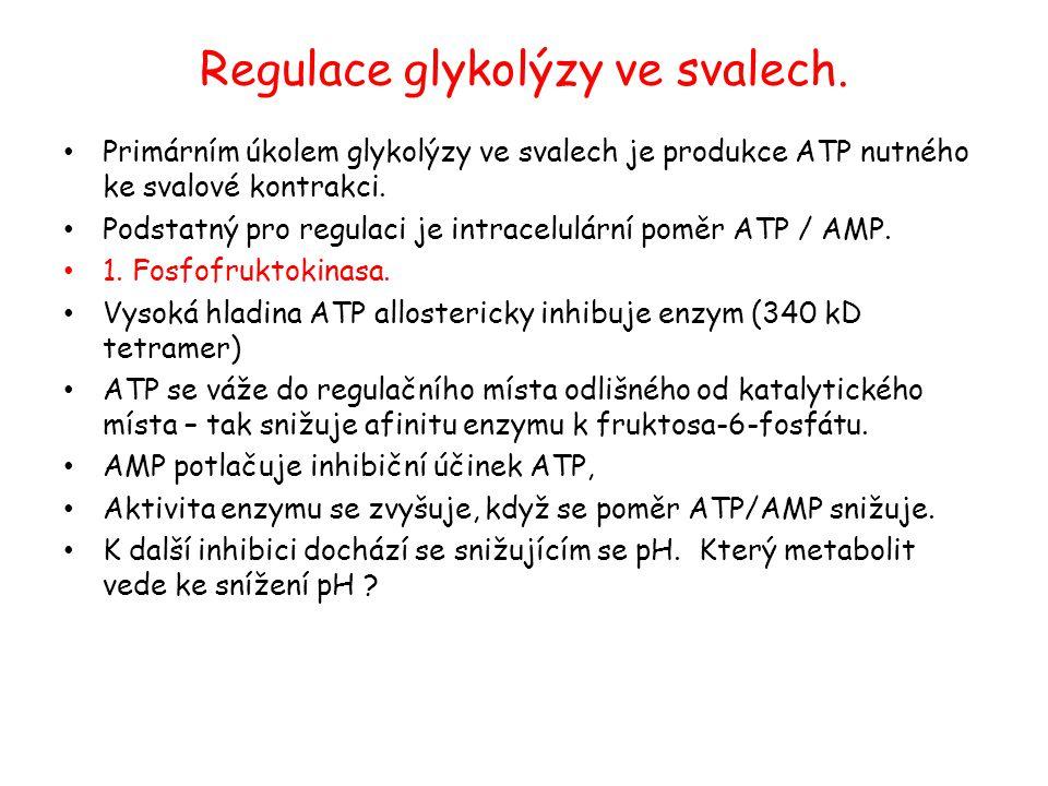 Regulace glykolýzy ve svalech.