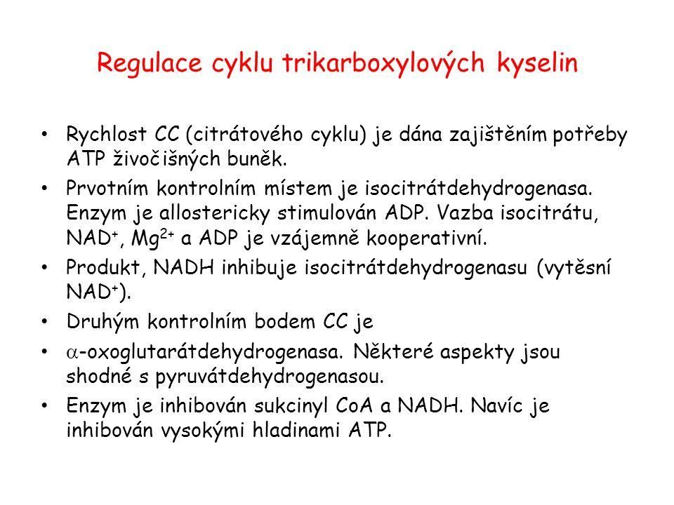 Regulace cyklu trikarboxylových kyselin
