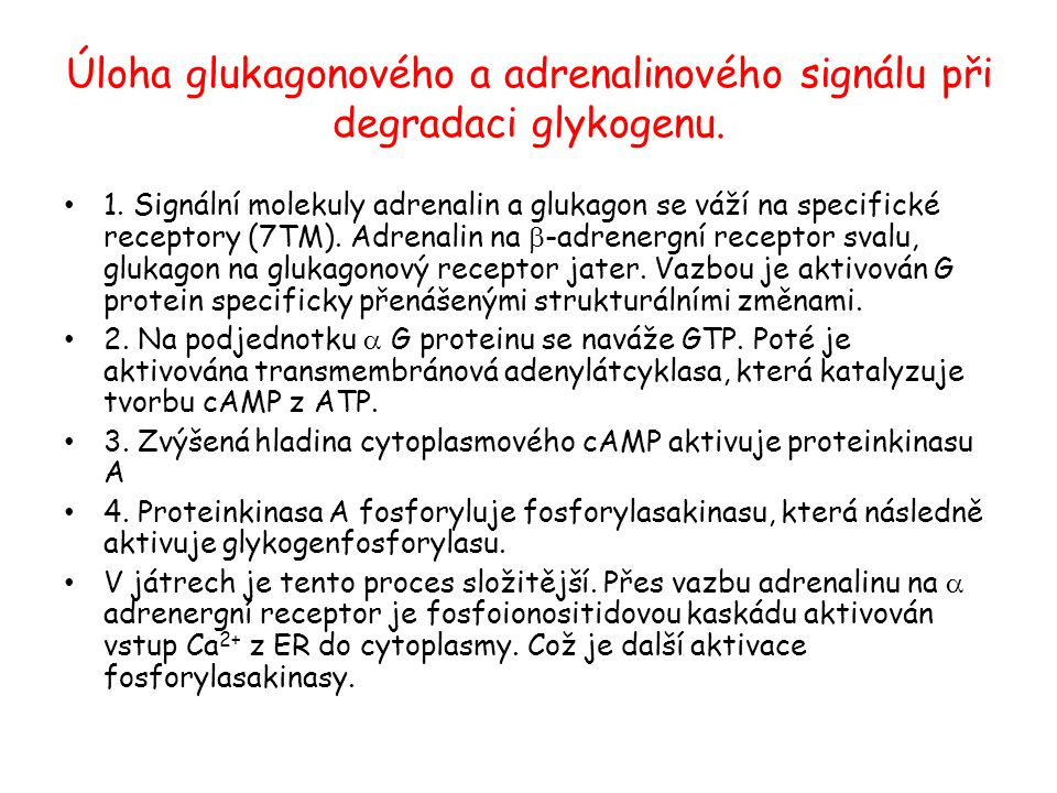 Úloha glukagonového a adrenalinového signálu při degradaci glykogenu.