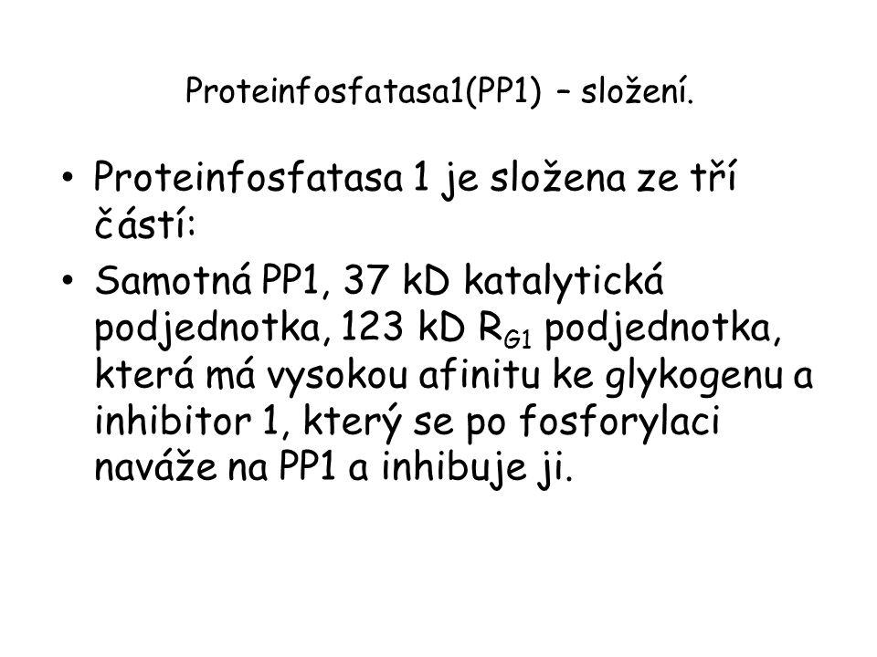Proteinfosfatasa1(PP1) – složení.