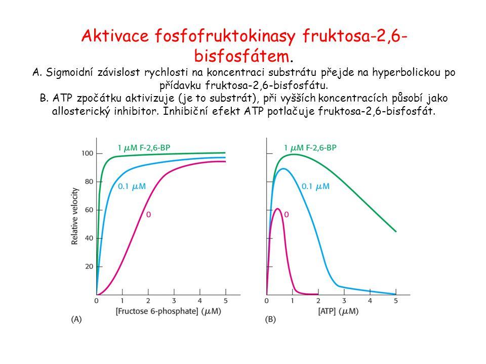 Aktivace fosfofruktokinasy fruktosa-2,6-bisfosfátem. A