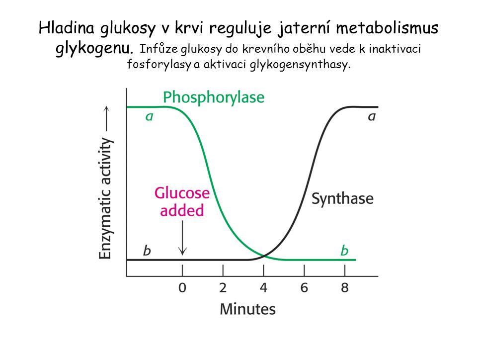 Hladina glukosy v krvi reguluje jaterní metabolismus glykogenu