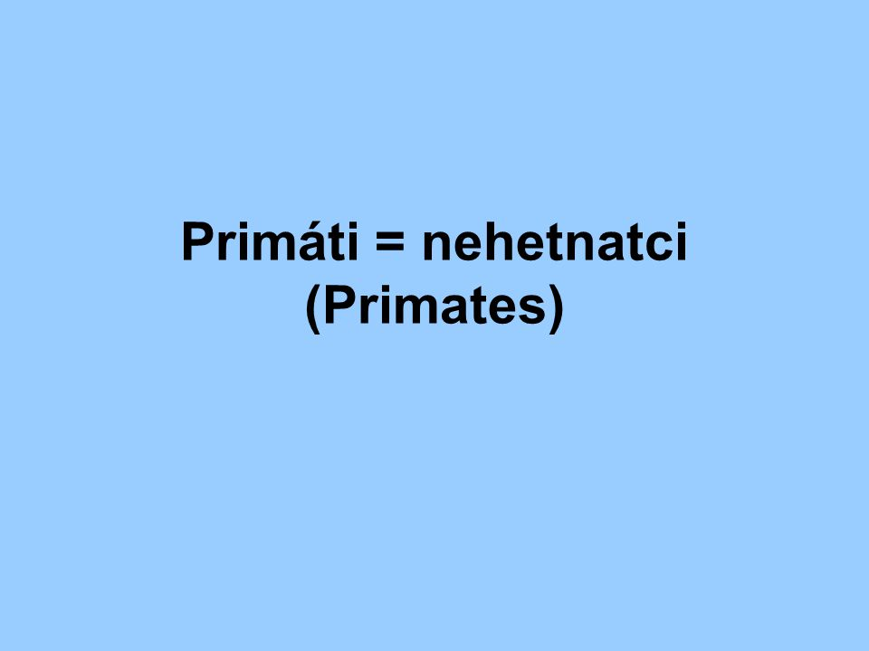 Primáti = nehetnatci (Primates)