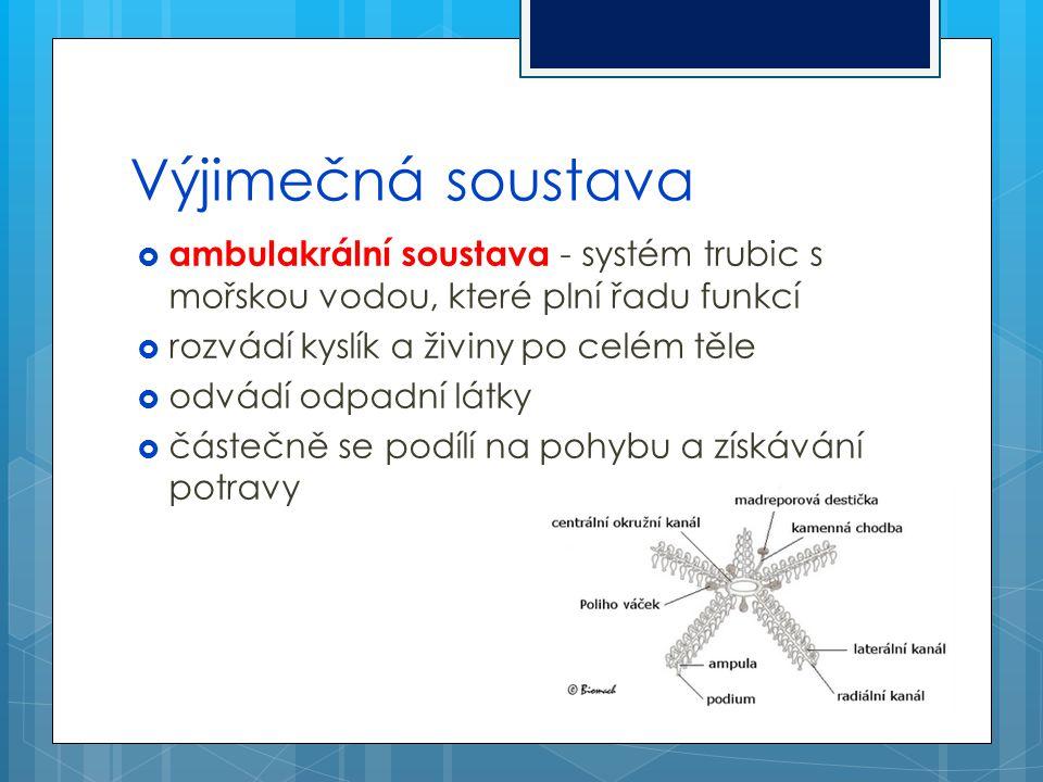 Výjimečná soustava ambulakrální soustava - systém trubic s mořskou vodou, které plní řadu funkcí. rozvádí kyslík a živiny po celém těle.