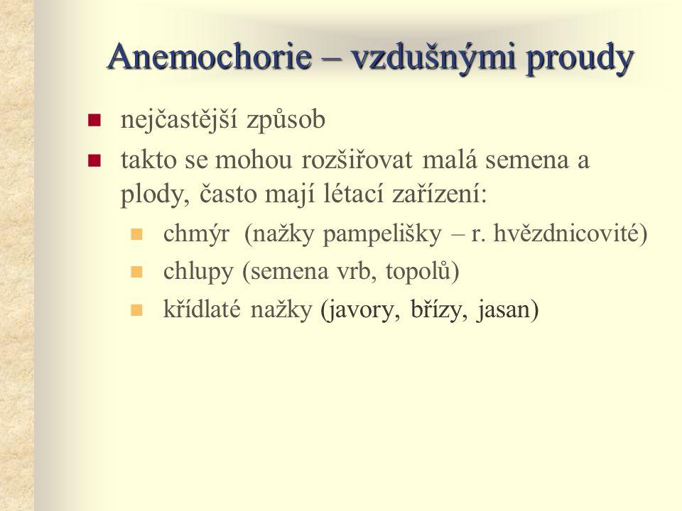 Anemochorie – vzdušnými proudy