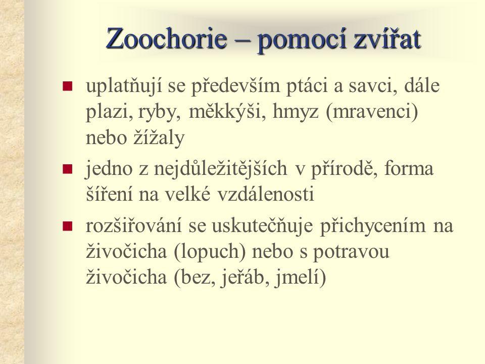 Zoochorie – pomocí zvířat