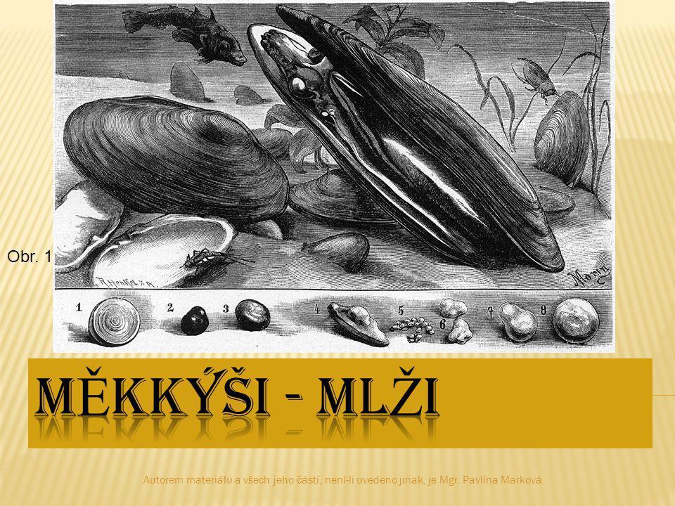 Obr. 1 Měkkýši - mlži. Autorem materiálu a všech jeho částí, není-li uvedeno jinak, je Mgr.