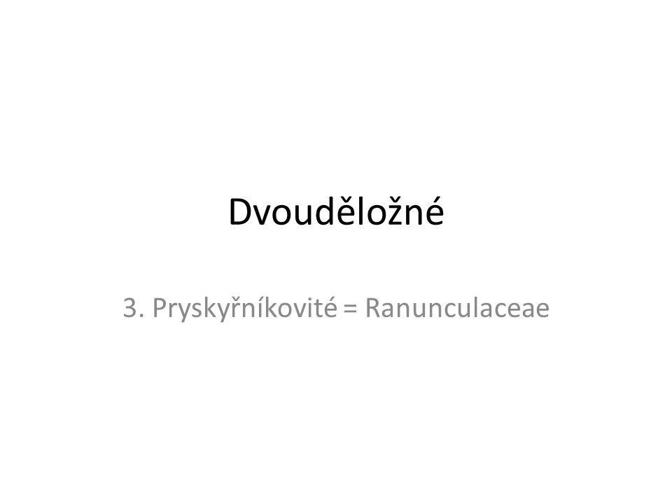 3. Pryskyřníkovité = Ranunculaceae