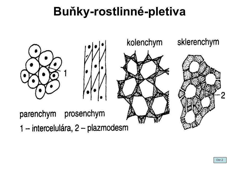 Buňky-rostlinné-pletiva