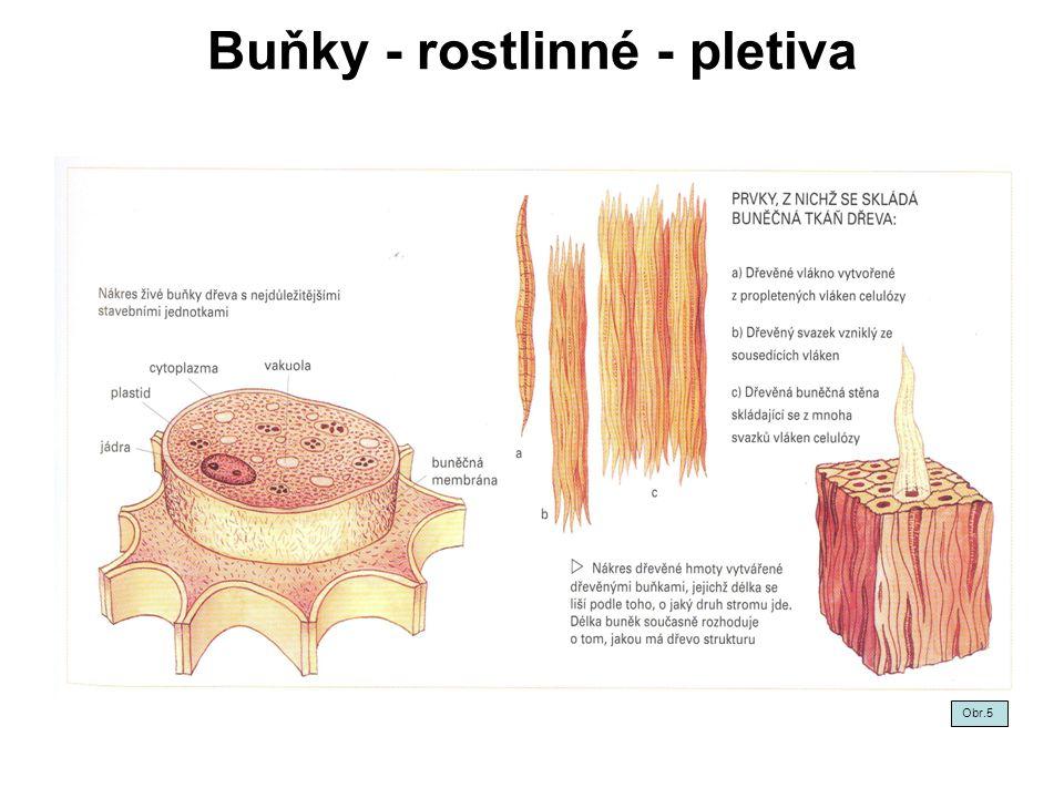 Buňky - rostlinné - pletiva