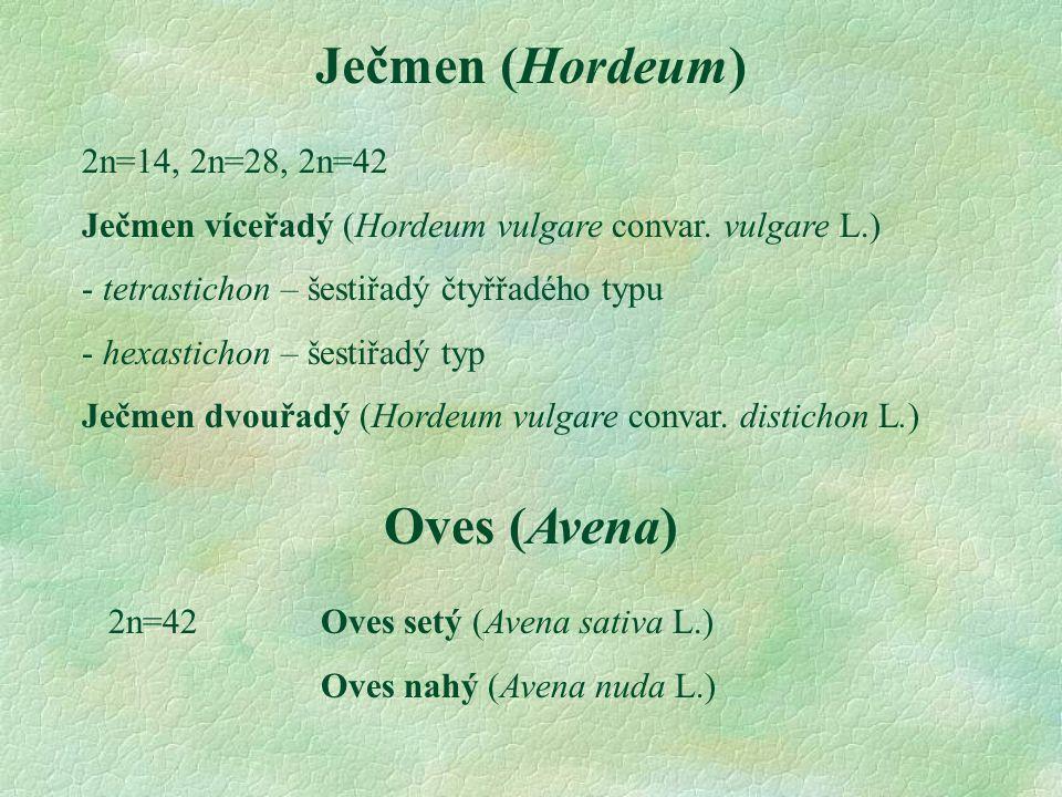 Ječmen (Hordeum) Oves (Avena)