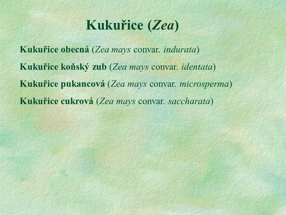 Kukuřice (Zea) Kukuřice obecná (Zea mays convar. indurata)