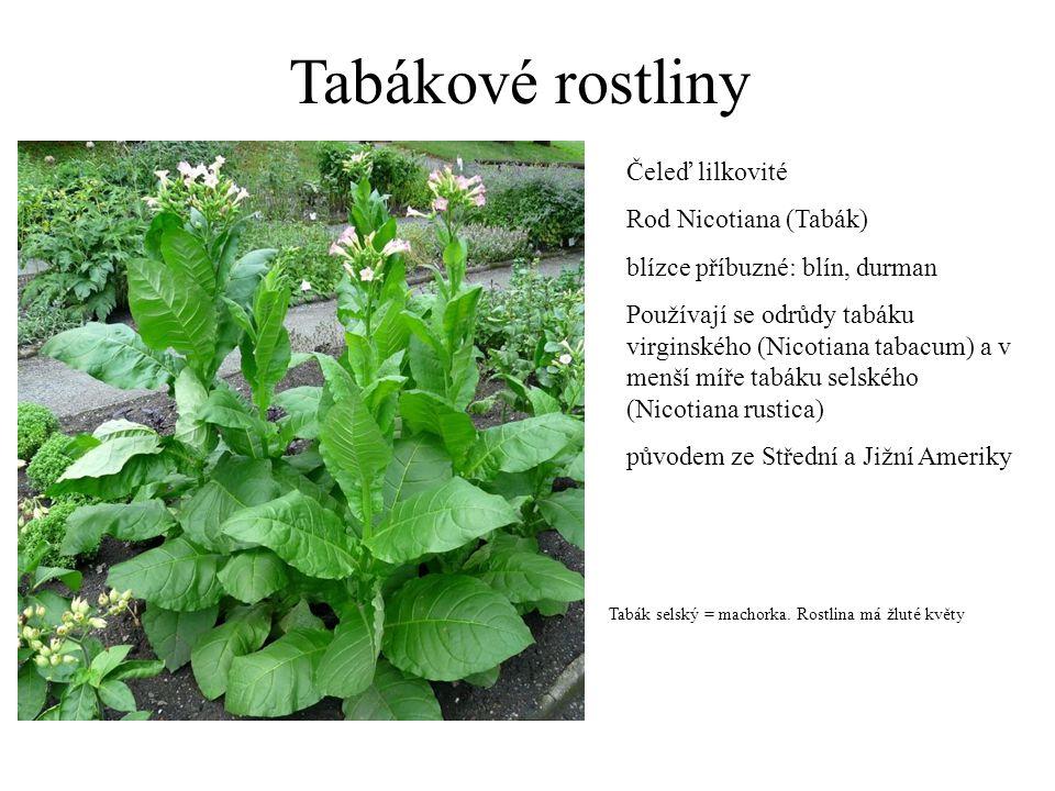 Tabákové rostliny Čeleď lilkovité Rod Nicotiana (Tabák)
