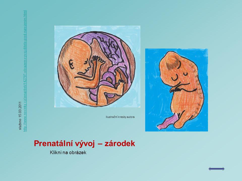 Prenatální vývoj – zárodek