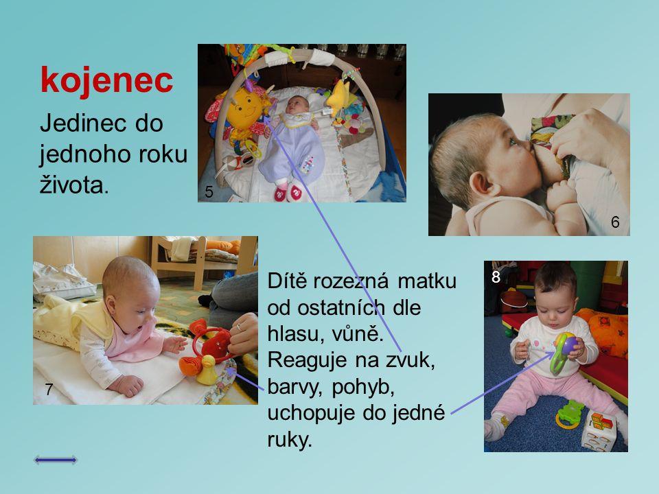 kojenec Jedinec do jednoho roku života.